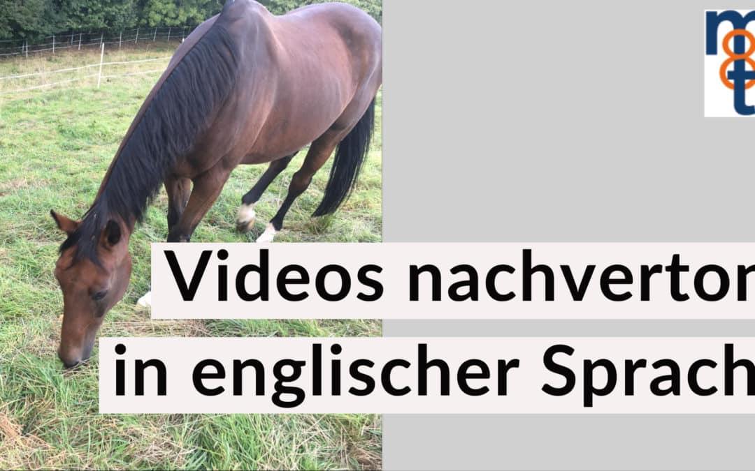 Videos nachvertont in englischer Sprache – Pferdetherapiezentrum Michael Stuckenberg