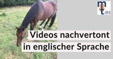 Video Nachvertonung – Pferdtherapiezentrum Michael Stuckenberg